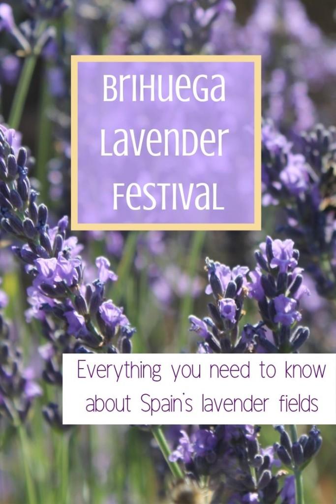 Brihuega Lavender Festival